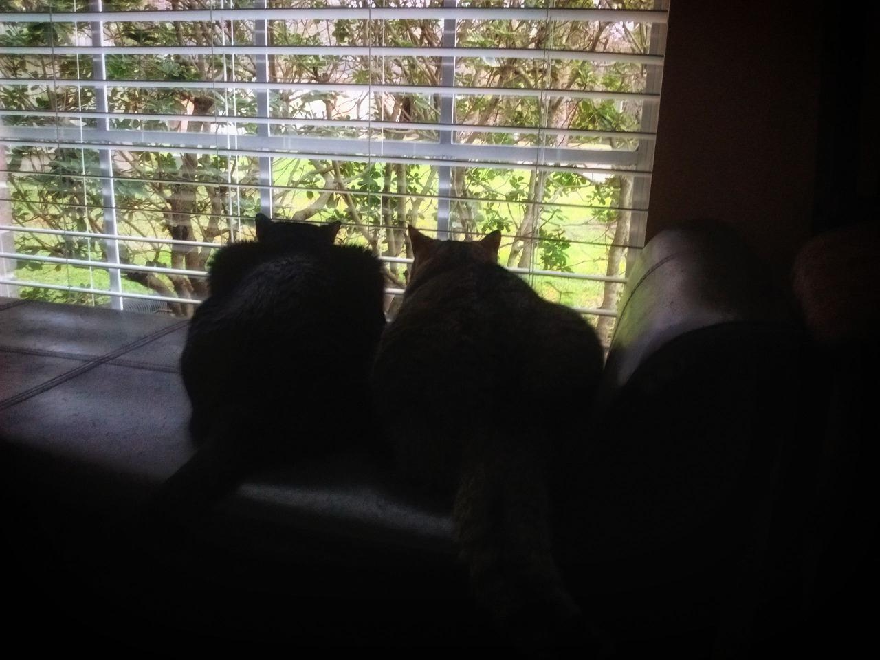 199/365 Párhuzamos macskák találkozása