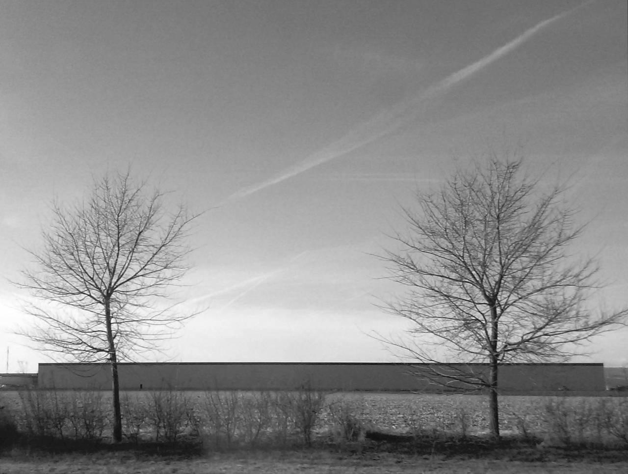 365/239 - Út menti fák