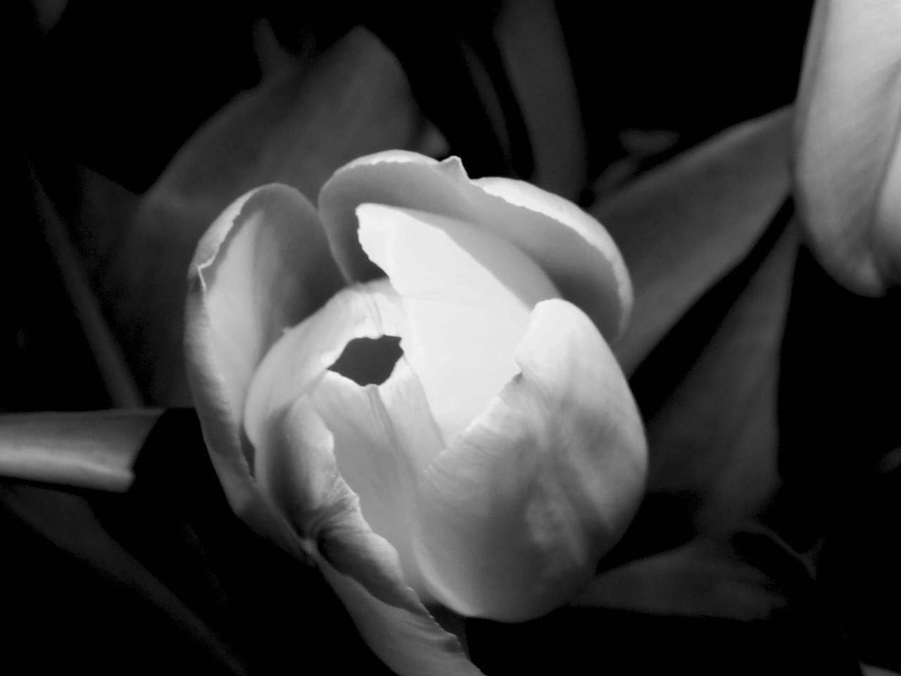 290/365 Virág