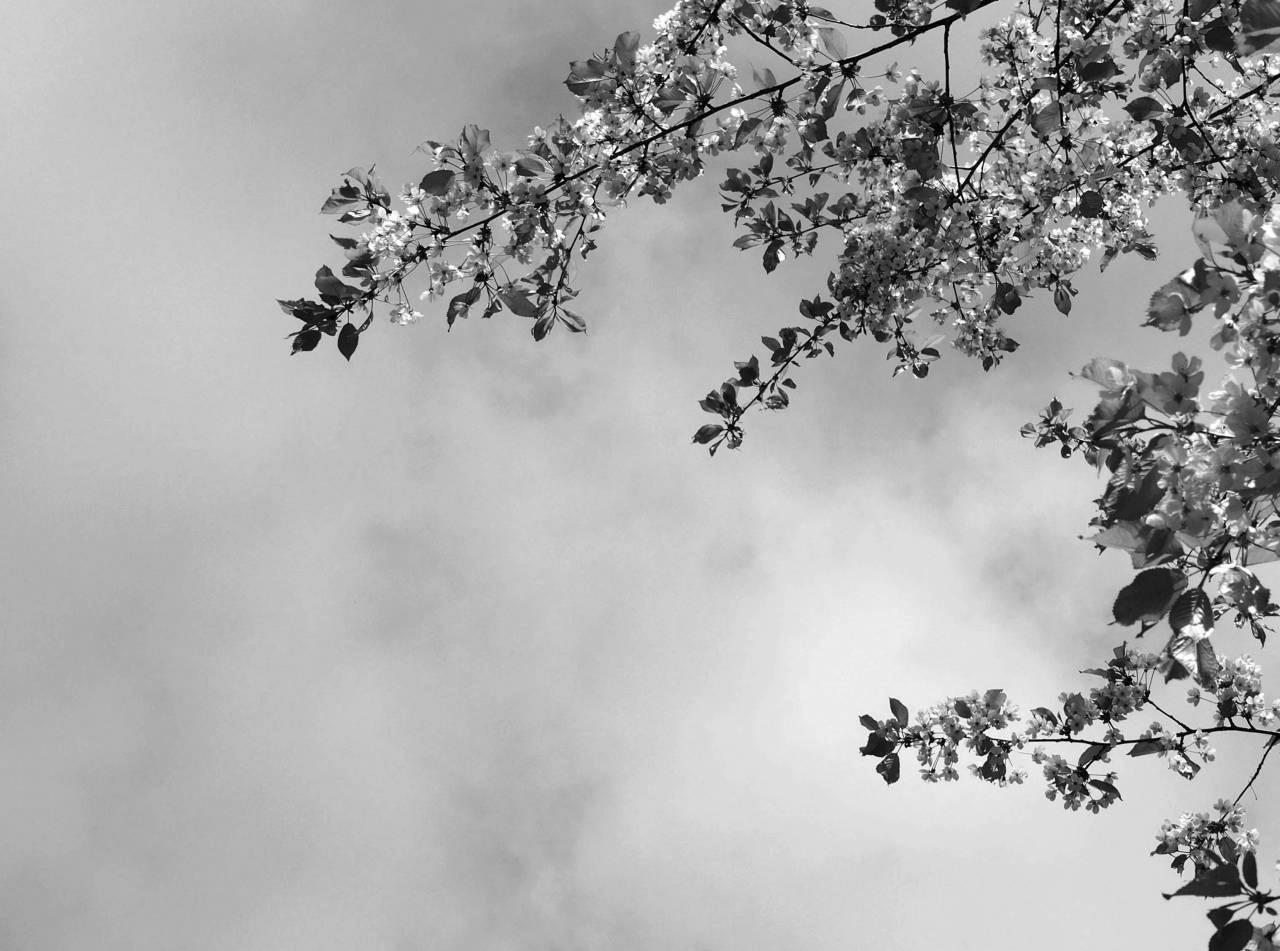 365/296 - Tavaszi ég