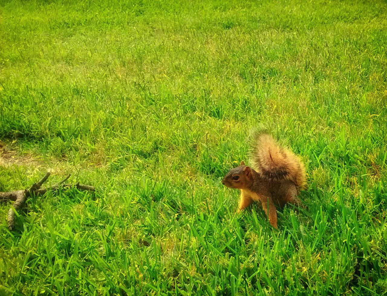 315/365 A mókuska ugrani készül
