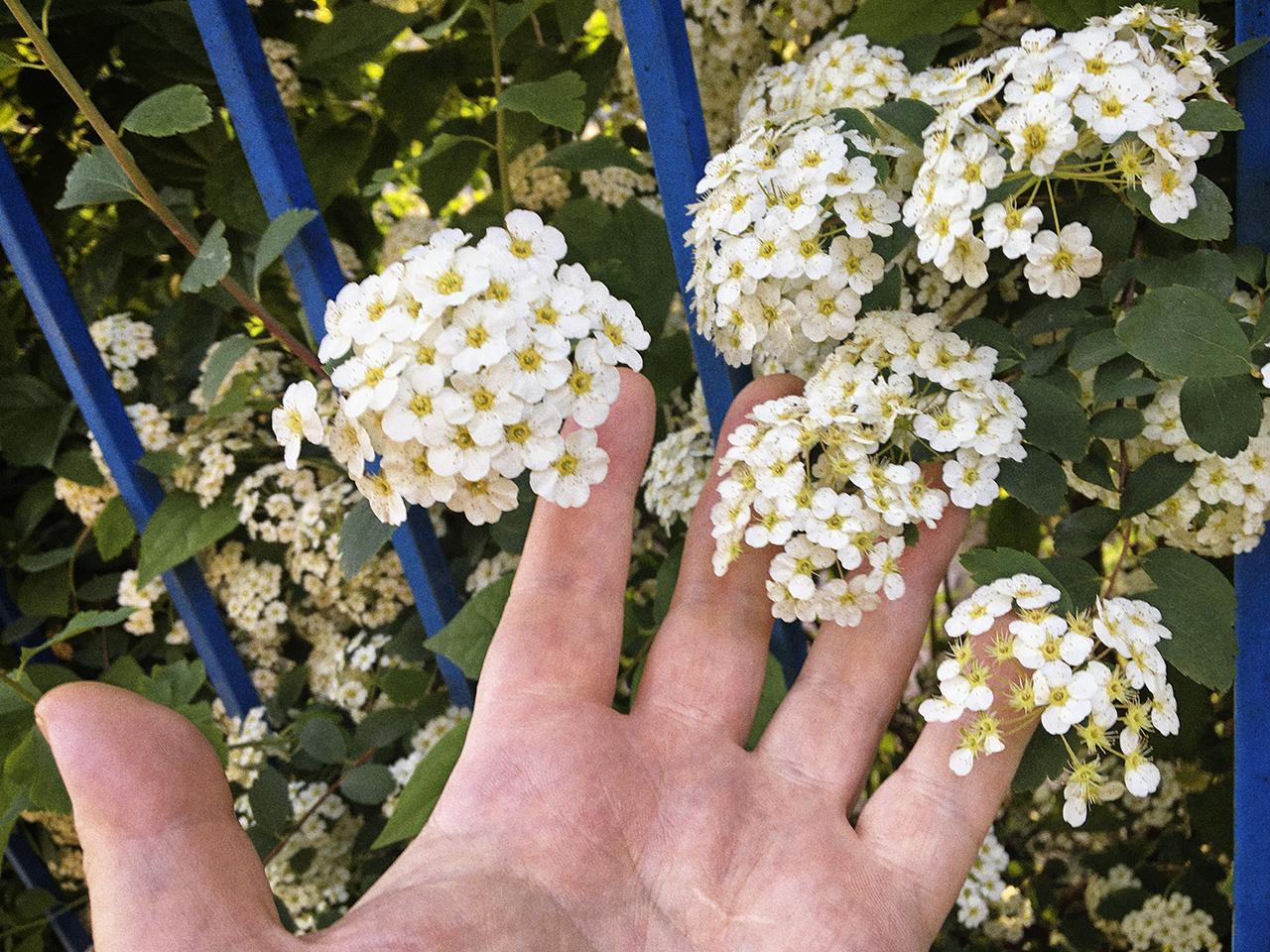 365/312 - Kertkapu virággal