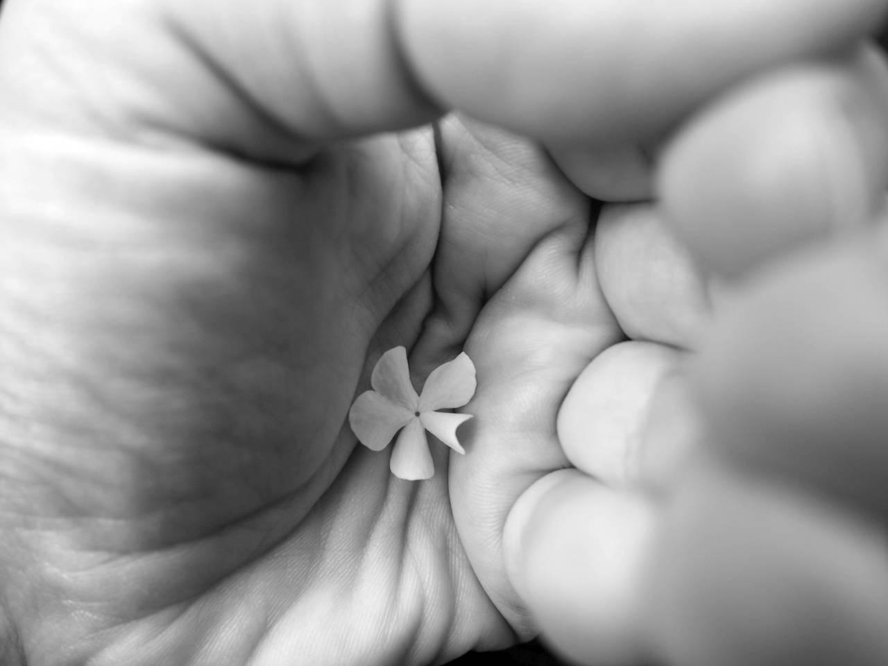 365/311 - Ember és virág
