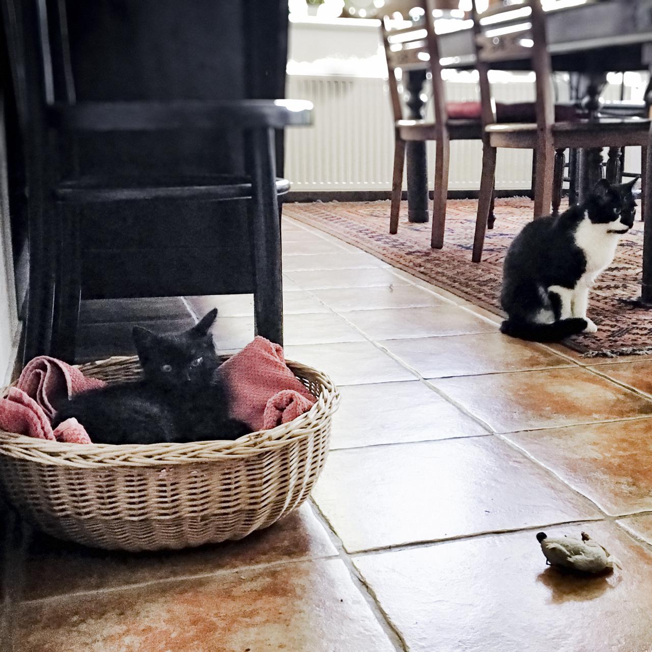 365/354 - Misa és Berci első találkozása