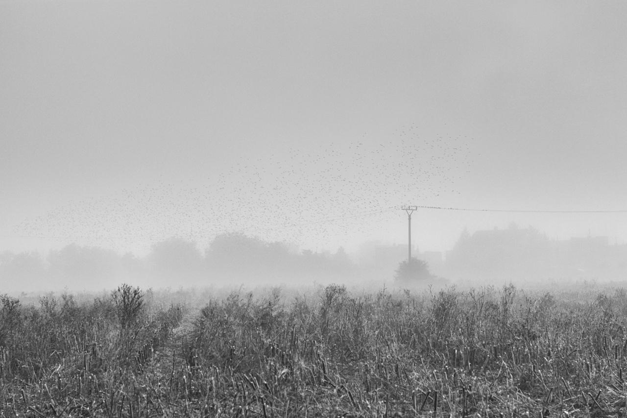 Egy ködös reggelen