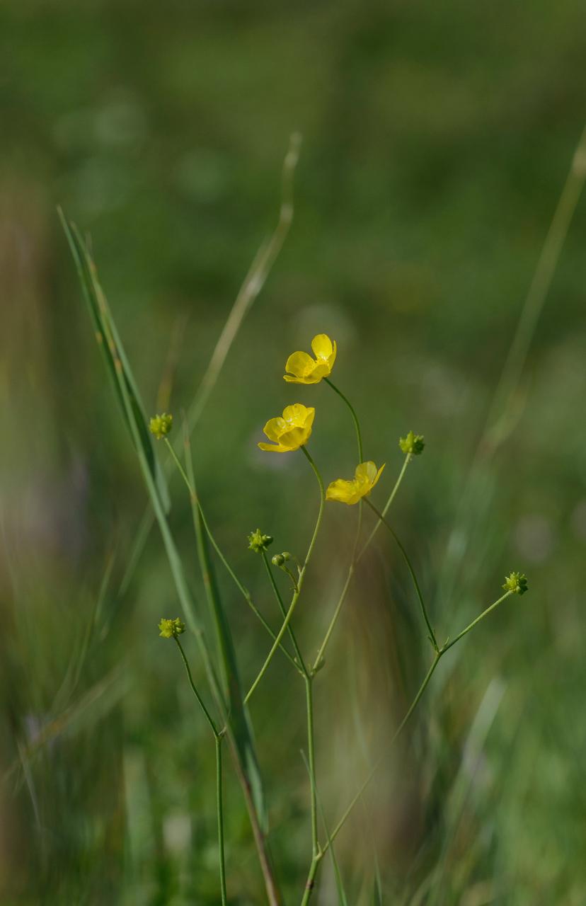 Sárga és zöld 2