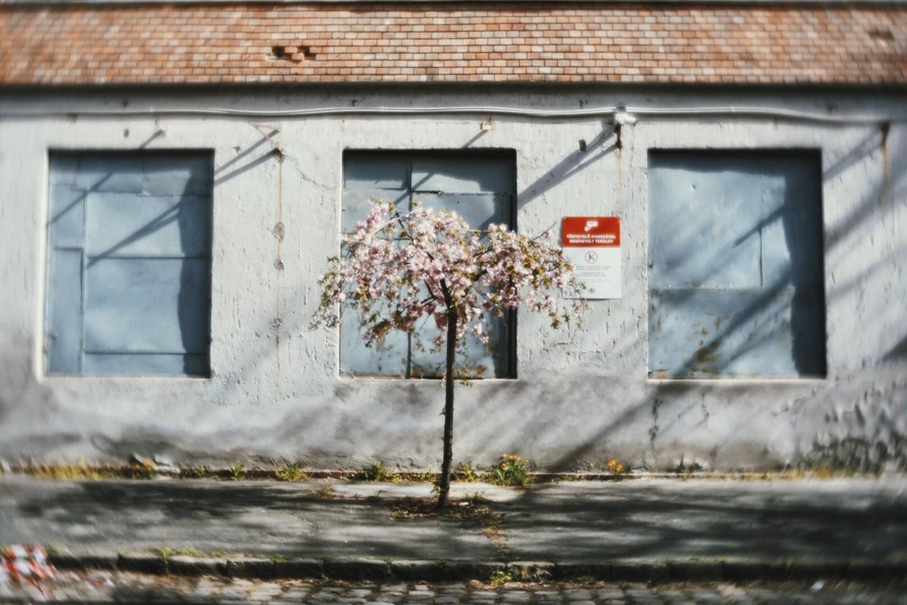 Tavasz Józsefvárosban