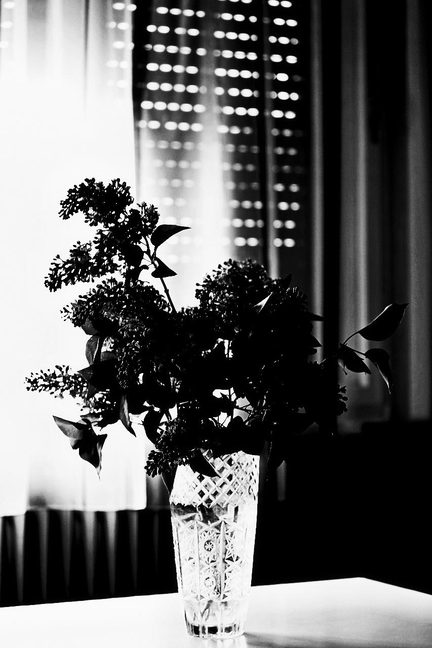 Orgonavirágok