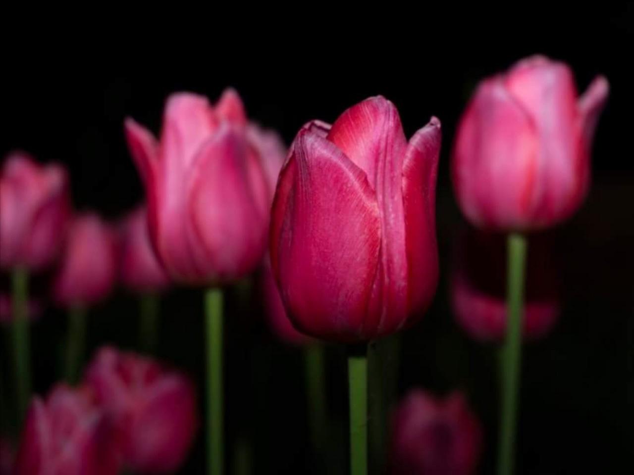 Virág szálak