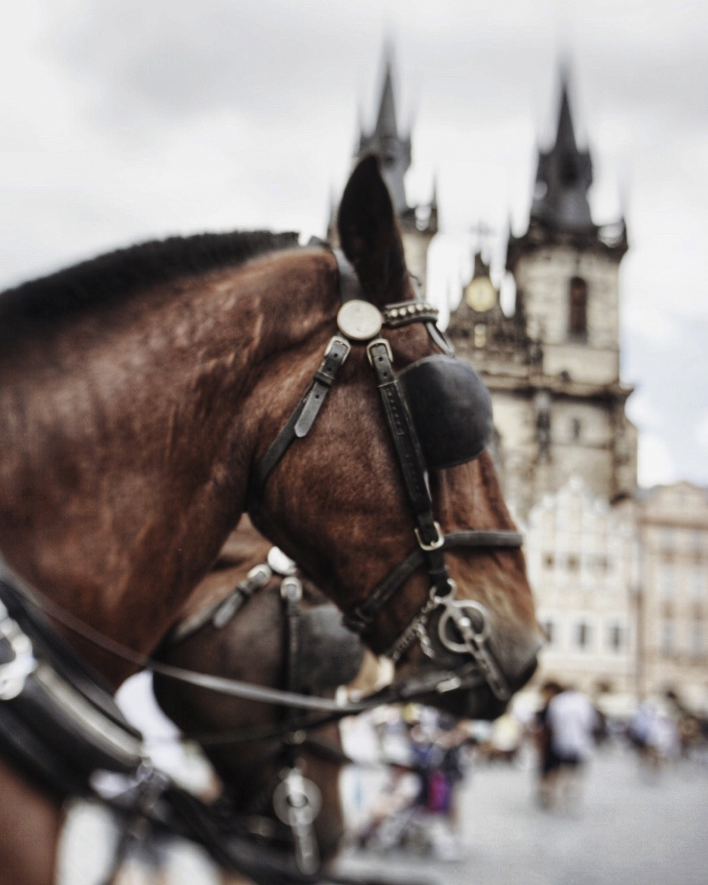 Prágai ló