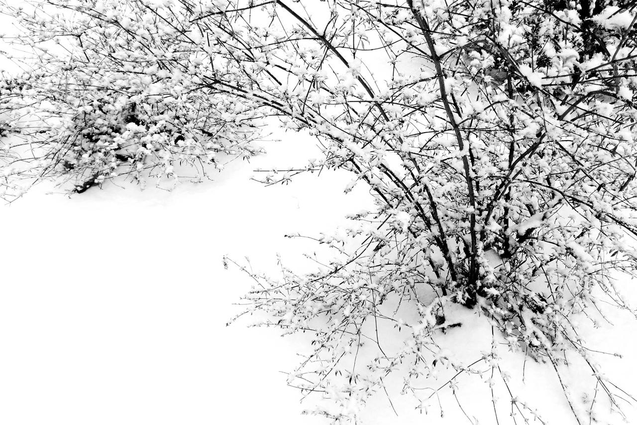 Hirtelen hó