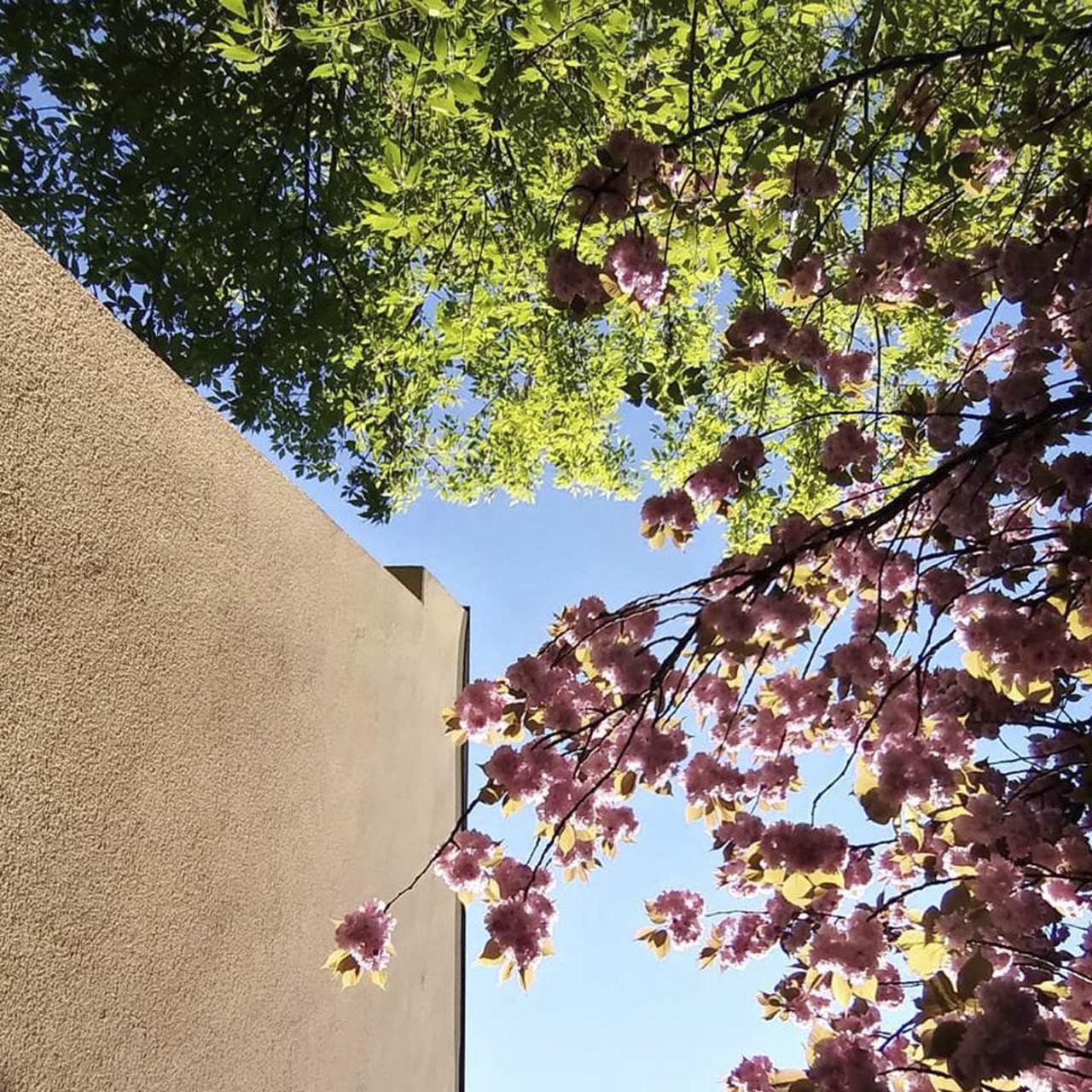 Tavaszi absztrakt
