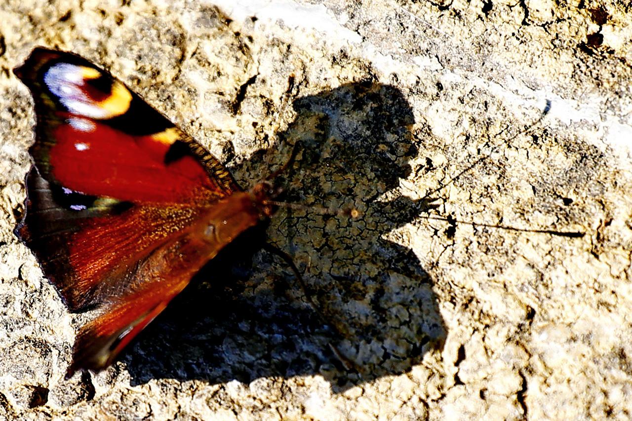 A pillangó árnyéka