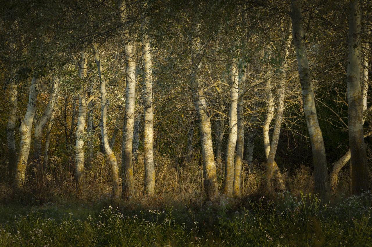 Erdőszél