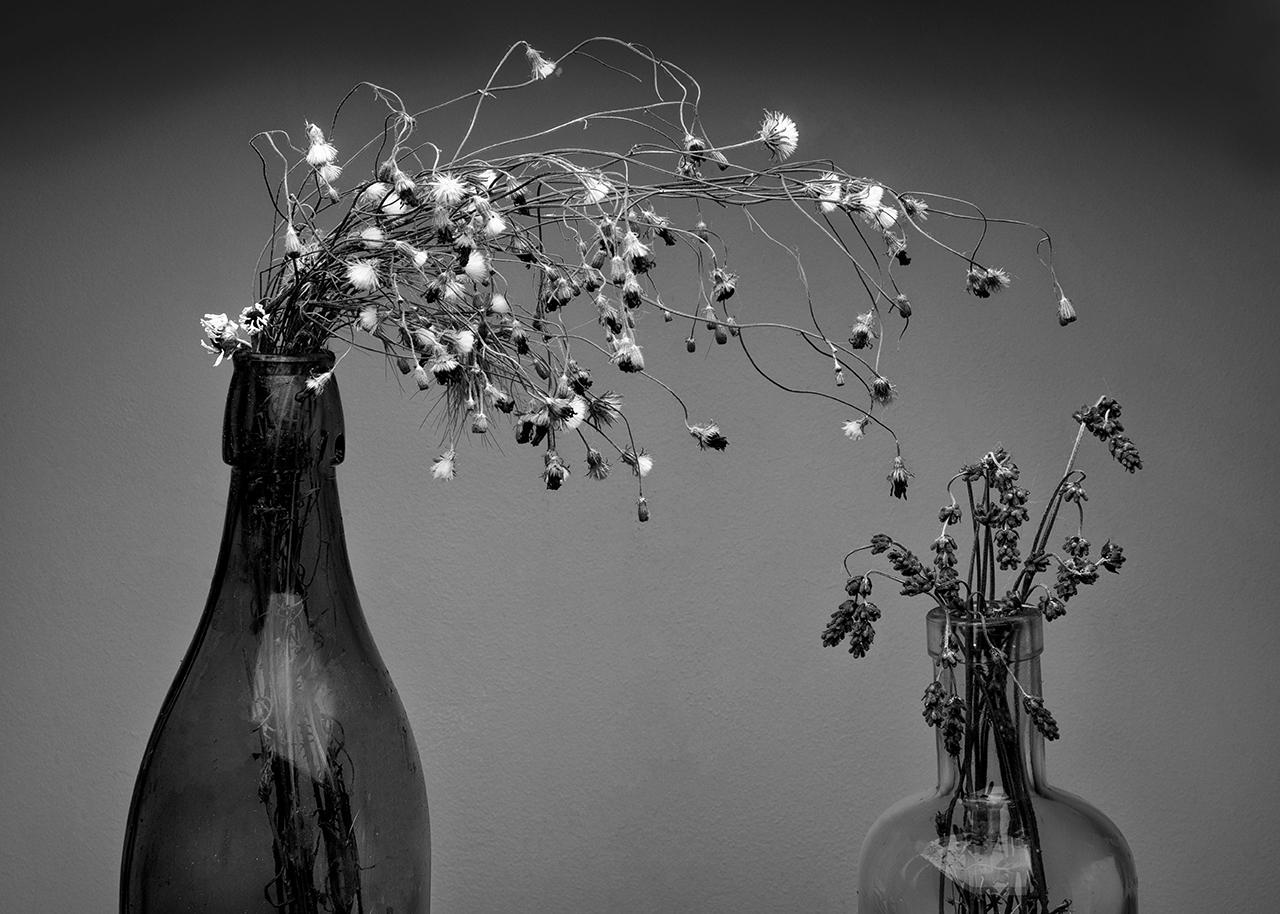 Növények két palackban