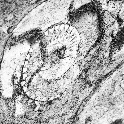 198/365 Palimpszeszt