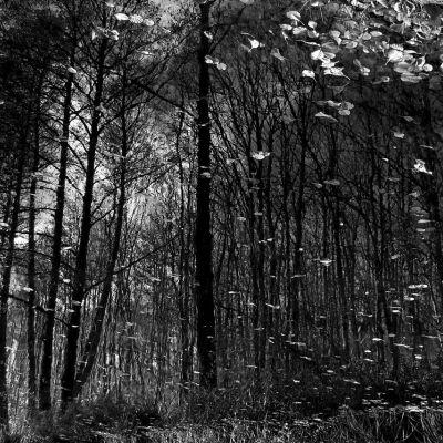 Képzeletbeli erdő