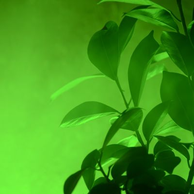 Élénk zöld(ség)