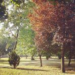 Putto 365/67 - közeleg az ősz