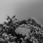 Putto 365/106 - virágdomb