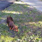 Talált kutyus (123.365)
