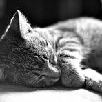 Alszik (158.365)