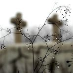 Ködös (204.365)