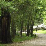 """365/308 """"Gondolok tehát fákat és gátakat."""""""