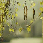 365/311 - Felvidéki tavasz