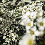 365/310 - Tavasz a kertben