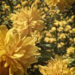 365/312 - Tavasz a kertben 2.