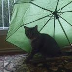 365/347 Zöld esernyő