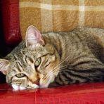 19/365 A macska kérdez