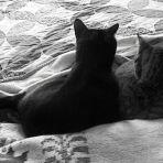 42/365 Macskák hátulról