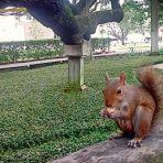 52/365 Éhes mókus