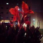 72/365 Virágok éjjel