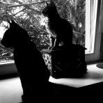 365/76 - A macskák
