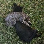 114/365 Macskák szieszta idején