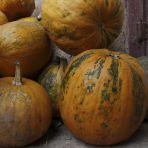 CF365.2.99 Az ősz - színei, termése