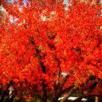 198/365 Ide is elért az ősz