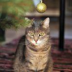 191.365 macska aranygömbbel