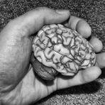 245/365 Nem agy