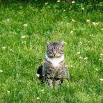 259/365 A legújabb vándor macskánk