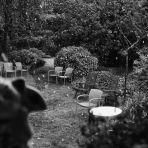 365/293 - Hó a kertben