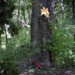 365/331 - Zöld erdőben jártam