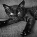 365/358 - Mísa, az új cica