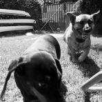 365/338 - Kerti kutyák